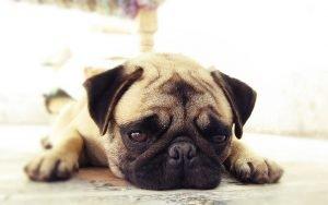 【小動物內科學】還在用食鹽催吐嗎?關於犬貓催吐你應該這樣做!